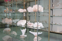 museo_ittico